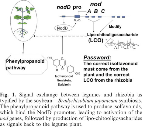 Microbial signaling and plant growth promotion | Plant microbe symbiotic signals | Scoop.it