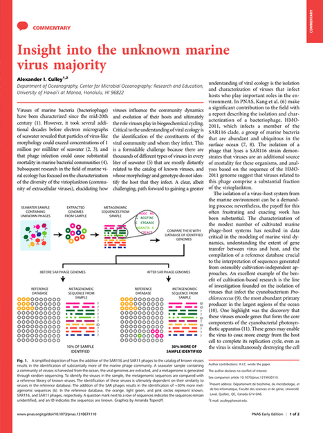 Insight into the unknown marine virus majority   Complex Insight  - Understanding our world   Scoop.it