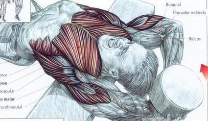 กล้ามท้อง วิธีเล่นกล้ามท้องให้ได้ผลดีที่สุด | เล่นกล้าม ฟิตเนส เล่นเวท เพาะกายไทย | Scoop.it