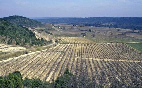 Vers une assurance obligatoire en Languedoc-Roussillon, Vigne & vin - Pleinchamp   Actus en LR   Scoop.it