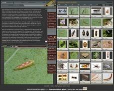 Galerie de photos d'insectes | Education et TICE | Scoop.it