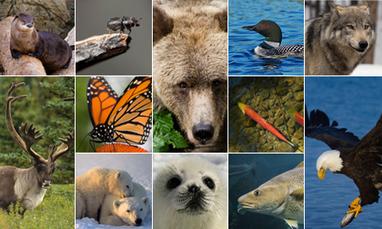 Canada: 7 nouvelles expositions sur le portail muséevirtuel.ca | Médias sociaux et tourisme | Scoop.it