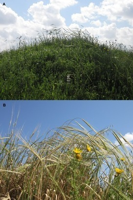 The Origin of Cultivation and Proto-Weeds, Long Before Neolithic Farming | plant cell genetics | Scoop.it