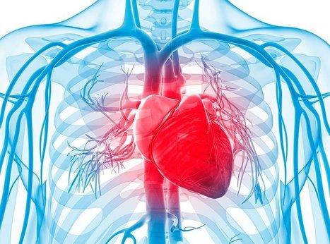 Què són les malalties cardiovasculars? | Salut a prop | Recull diari | Scoop.it