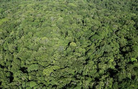 La reforestation ne suffira pas à résoudre le problème du réchauffement climatique | Biodiversité & Relations Homme - Nature - Environnement : Un Scoop.it du Muséum de Toulouse | Scoop.it