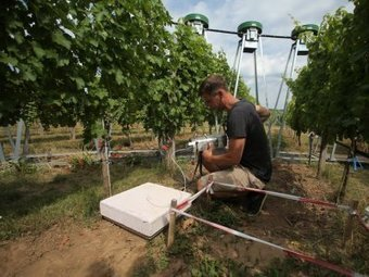 German researchers study climate change effects on #wine and its taste - World Report | Vitabella Wine Daily Gossip | Scoop.it