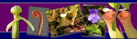 Les Plantes Carnivores | Potager & Jardin | Scoop.it