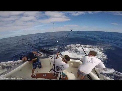 Un marlín saltó del agua directamente hacia la embarcación y casi ensarta a uno | TJmix Mundial | Scoop.it