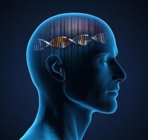 Psychologists discover oxytocin receptor gene's link to optimism, self-esteem   Brain Momentum   Scoop.it
