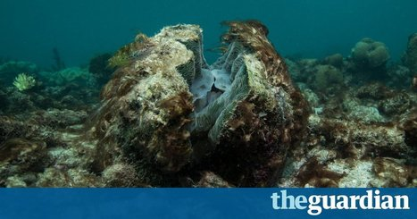 The Guardian view on the Great Barrier Reef: the crisis they prefer to downplay | Marine Conservation Research | Scoop.it