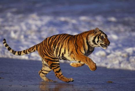 De tien meest populaire dieren ter wereld - Ecologie - De Morgen | MaCuSa Sam | Scoop.it