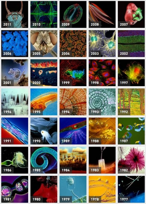Nikon Small World: Science Photo Competition from 1977-2011 | Amazing Science | Scoop.it