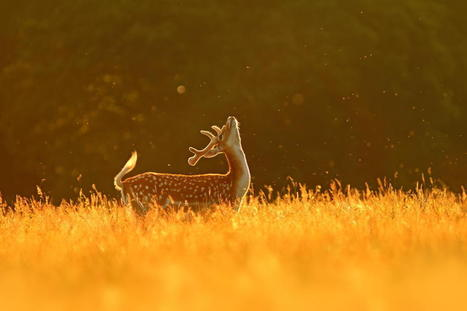 39 Magical Photos Of Animals Basking In The Golden Hour | Inspirational Photography to DHP | Scoop.it