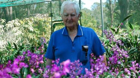 Orchids are Syd's second love - Great Lakes Advocate | Gardening Australia | Scoop.it