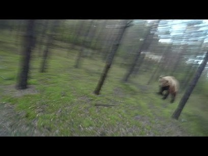 Bear chasing a cyclist | Awesome | Scoop.it