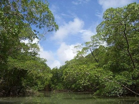 La selva | animales de la selva55 | Scoop.it