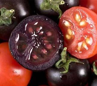 Genetically modified purple tomatoes 'tastier and last longer' | Articles mentioning John Innes Centre | Scoop.it