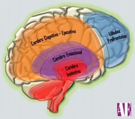 El Cerebro ejecutivo en el TDA-H | Orientación Educativa - Enlaces para mi P.L.E. | Scoop.it