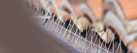 Bird Proofing Solutions Supplier - Nets n Spikes | Business | Scoop.it