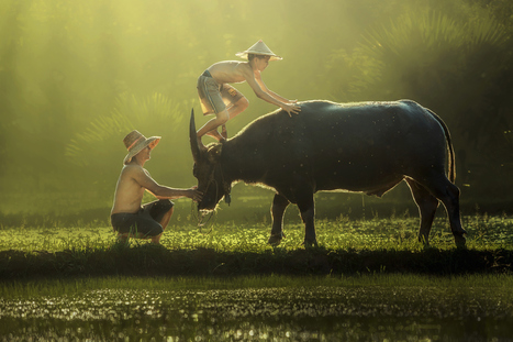 Thai children farmer  was climbing Buffalo. by Jakkree Thampitakkul | I didn't know it was impossible.. and I did it :-) - No sabia que era imposible.. y lo hice :-) | Scoop.it