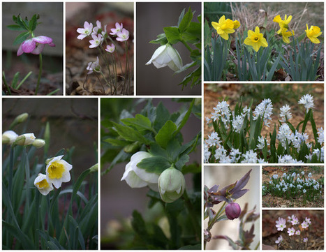From the Soil: A Spring Evening in the Garden | Annie Haven | Haven Brand | Scoop.it