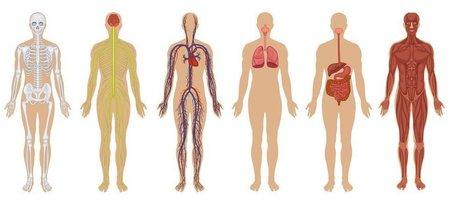 9 Things That Happen When You Stop Eating Meat | LibertyE Global Renaissance | Scoop.it