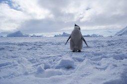 Antarctique : échec pour la création d'une nouvelle aire marine ... | Protection des fonds marins | Scoop.it