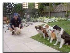 Service Area – Melbourne, Ashburton, Brighton, Camberwell, Canterbury, Doncaster, Glen Waverley, Hawthorn … | Dog  Training Melbourne | Scoop.it