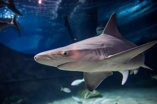 Fin fun: Aquariums provide waves of entertainment - GoErie.com | Pets | Scoop.it