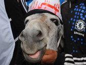 Le gouvernement Benkirane comparé à des ânes, les associations de défense des animaux s'indignent | Mon journal | Scoop.it
