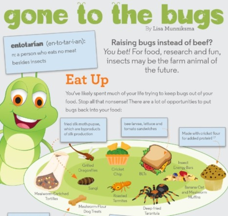 Infographic: Is Insect Farming the New Ag Frontier? - Hobby Farms | Entomophagy: Edible Insects and the Future of Food | Scoop.it