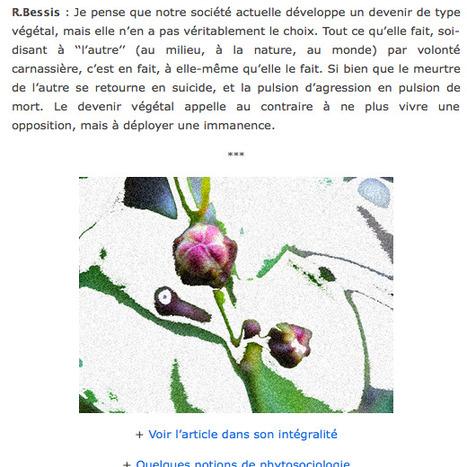 Devenir végétal - de l'anthropologie des réseaux | whynotblogue | Scoop.it