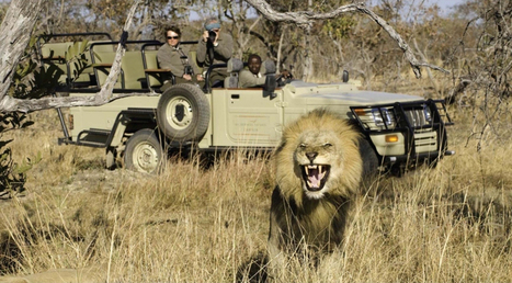 What does a Safari in Africa mean to you? | holidaytoafrica | My Funny Africa.. Bushwhacker anecdotes | Scoop.it
