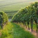 Vins de Saint-Émilion: le classement 2012 contesté devant la justice | Vins & Plaisirs | Scoop.it