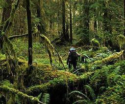Climate change's effects on temperate rain forests surprisingly complex | Temperate Forest | Scoop.it