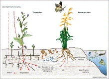 Trends in Plant Science - Glyphosate in northern ecosystems | plant cell genetics | Scoop.it
