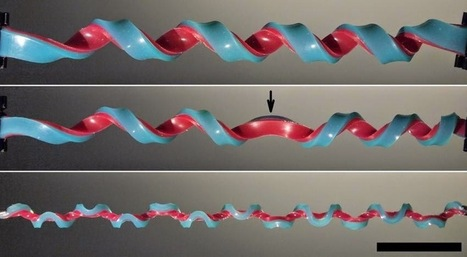 Scientists discover a new shape using rubber bands hemihelix | Tracktec | Tracktec | Scoop.it
