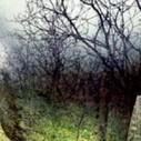 Разъединены себе на зло | природа | Scoop.it
