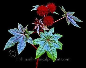 David Fishman's Otherworldly Plant Portraits Will Amaze You - Fine Gardening | Annie Haven | Haven Brand | Scoop.it