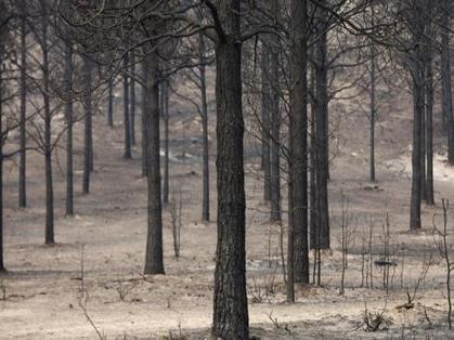 """باحثون: الأشجار """"تشهق"""" عند العطش   منوعات   Scoop.it"""