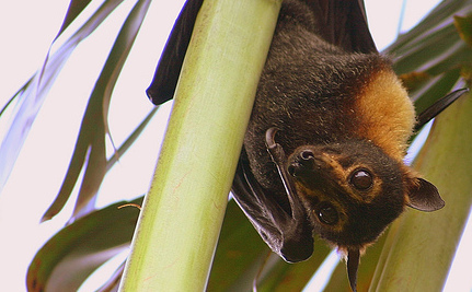 Sydney Park Uses Industrial Music to Chase Off Bats | Your Passions | Scoop.it
