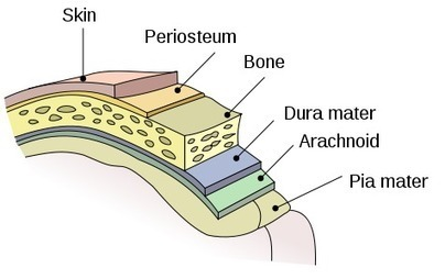 China using 3D bio printer to create artificial dura mater | 3D_Materials journal | Scoop.it