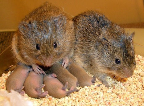 Even Some Rodents Display Empathy | Empathy and Compassion | Scoop.it