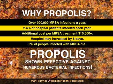 Propolis, Powerful Ally Against Bacteria | Health from the Hive | Scoop.it