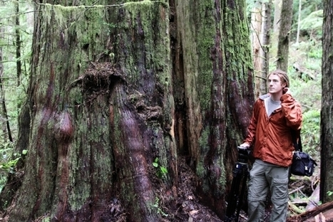 Logging B.C. old-growth forests accelerates climate change: Sierra Club report | Sustain Our Earth | Scoop.it