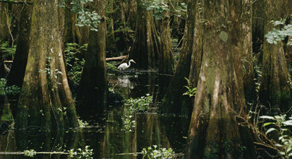 Florida's Water and Land Legacy - Defenders Blog | GarryRogers Biosphere News | Scoop.it
