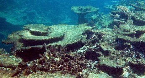 Great Barrier Reef Losing Coral Cover   Ornamental Aquatics   Scoop.it