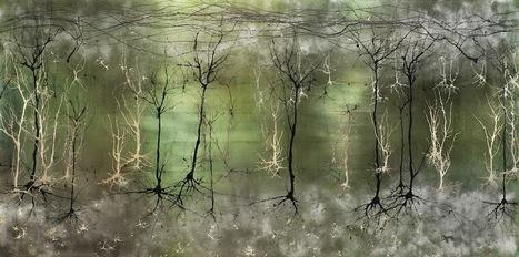 #Recomiendo: Neurogénesis: ¿Cómo crecen las nuevas neuronas? | Sociedad 3.0 | Scoop.it