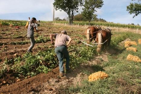 L'homme qui cultivait à l'oreille des chevaux | Cette nature qui nous soigne | Scoop.it
