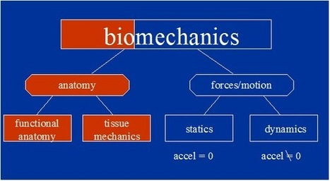Biomechanics 101 | Science of Sports Performance | Performance Sports Coaching | Scoop.it